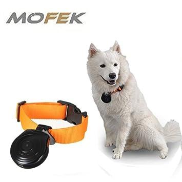 mofek 16 G automático mascota cuello Mini cámara DVR grabadora de vídeo Monitor para perros cachorro de gato negro: Amazon.es: Productos para mascotas
