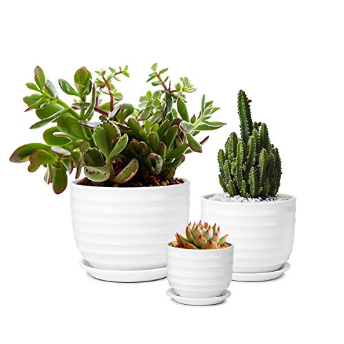 (Flexzion Succulent Plants Pots, Flower Planters - Modern Ribbed Ceramic Round Container Set of 3, 3/5/7 Inch White for Cactus African Violet Foliage Mint Basil Herb Windowsill Garden Indoor Outdoor)