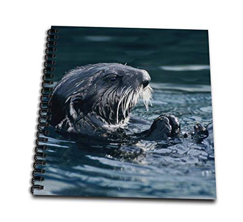 Danita Delimont–Wildlife–Sea Otter野生生物、シェル、スワード、アラスカ–na02rnu0780–Rolfナスバウマー–Drawing Book 4x4 notepad db_84609_3