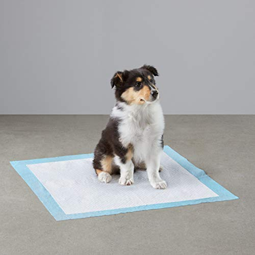 Amazon Basics Dog and Puppy Pee, Heavy Duty Absorbency Potty Training Pads with Leak-proof Design and Quick-dry Surface, Heavy Duty Regular (24 x 23 Inches) - Pack of 50