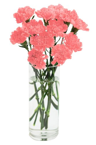 Pink Carnation Bouquet (12 Stems) - With Vase