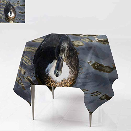 AFGG Spillproof Tablecloth,Manky Mallard - Mallard Duck Hybrid,Table Cover for Dining,70x70 Inch ()