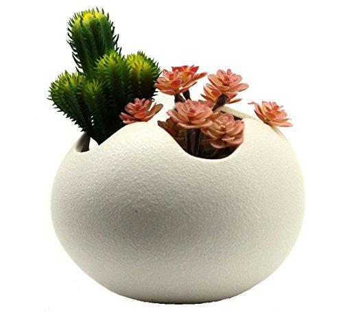 - Mecai 5.2 inch Ceramic Pot Water Planting Plants Egg Shaped Succulent Flowers Planter Desk Art(White