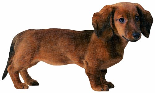 Paper House Productions Jigsaw Shaped Puzzle 28 by 17-Inch, Dachshund (500 Pieces)