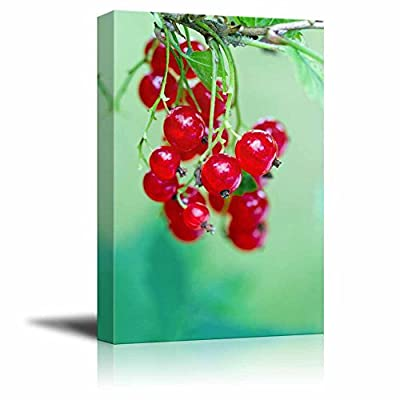 Canvas Prints Wall Art - Branch of Ripe Red Currant Berries and Leaves in a Summer Garden | Modern Wall Decor/Home Art Stretched Gallery Wraps Giclee Print & Wood Framed. Ready to Hang - 18