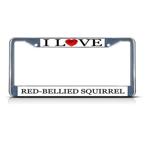 I Love Heart Red-Bellied Squirrel Chrome Metal License Plate Frame Tag (Bellied Squirrel)