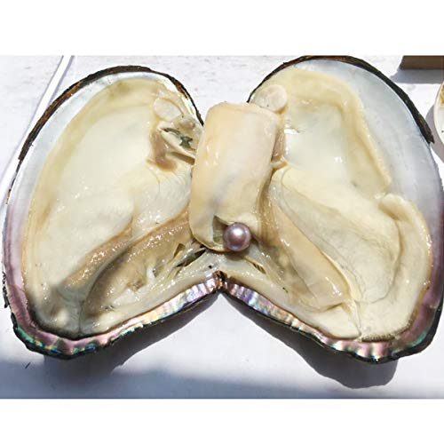 (HENGSHENG 1 PC Big Monster Oyster with Edison Pearl Inside AAA 10-13 mm Edison Pearl White Pink Purple Random Color Pearl Oyster)