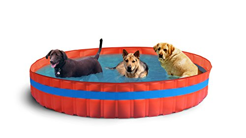 New Plast 3100 – My Dog Pool Piscine pour Chiens, 305 x 46 cm (ØxH)