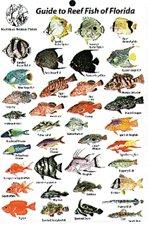 Mini Flordia Fish Card