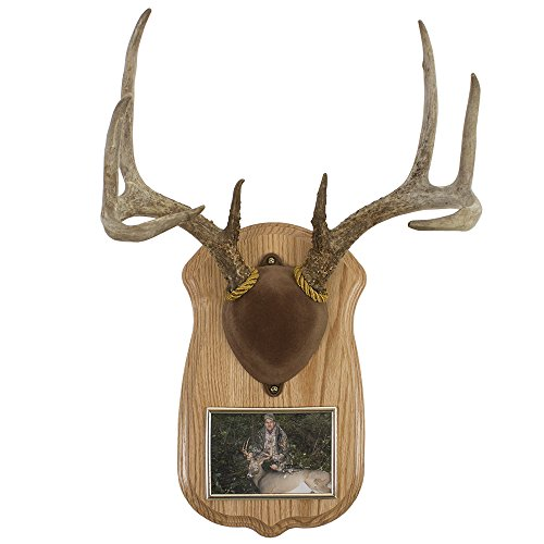 Walnut Hollow Country Deluxe Antler Display Kit with Photo Frame, Oak (Mount Deer Rack)