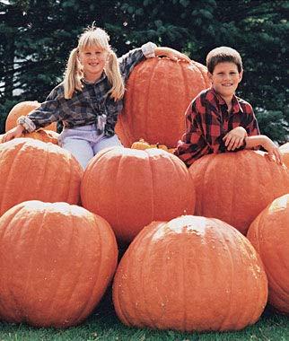 Cicitar Garden- 20pcs Rare Pumpkin, Atlantic Giant up to 200 lb, High-yielding Organic Vegetable Seeds Exotic Hardy Perennial -
