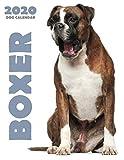 Boxer 2020 Dog Calendar