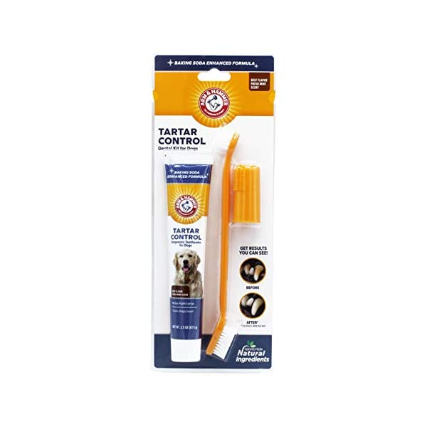 ARM & HAMMER Paste & Brush Set 1