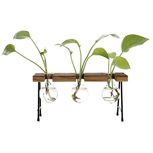 (TiTa-Dong Hydroponic Plant Vases with Wooden Stand, Plant Glass Container Stand Glass Planter Bulb Vase Metal Rotating Holder Air Plant Planter Office and Home Desktop Decoration)