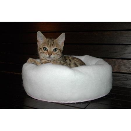 Works Like a Magnet , Mysterious Mini Kitten Kuddler Cat Bed