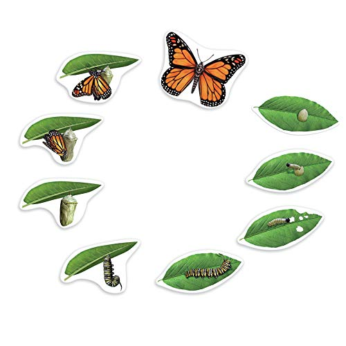 (Learning Resources Butterfly Life Cycle)
