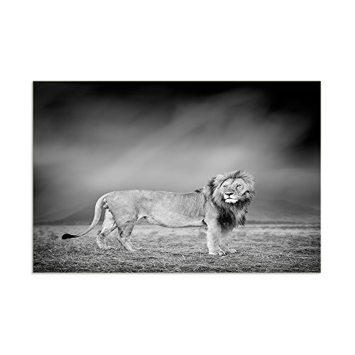 KALAWA Black And White Gray the Lion King Painting Head Port