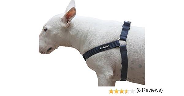 Dogs My Love Arnés Ajustable de algodón para Perro, 4 tamaños, Color Azul: Amazon.es: Productos para mascotas
