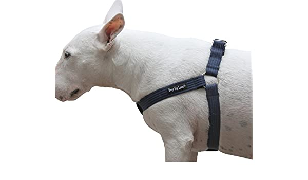 Dogs My Love Arnés Ajustable de algodón para Perro, 4 tamaños ...