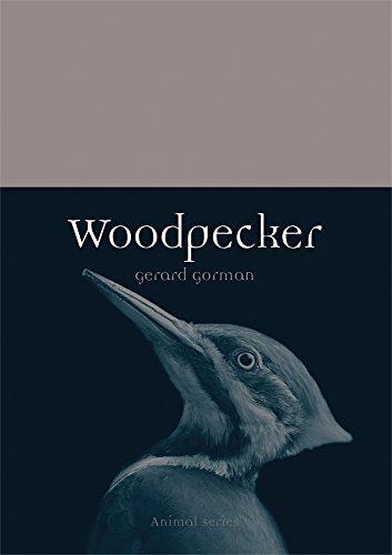 (Woodpecker (Animal))
