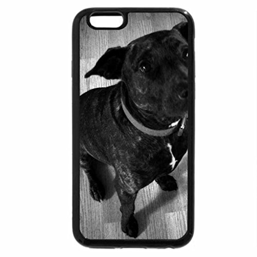 iPhone 6S Case, iPhone 6 Case (Black & White) - beautiful, obedient dog.
