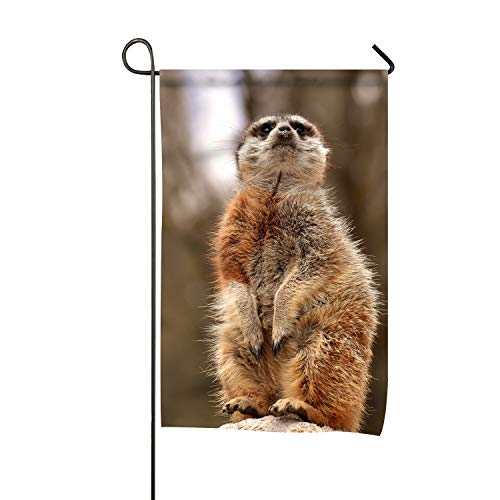 Meerkat Garden Lights in US - 9