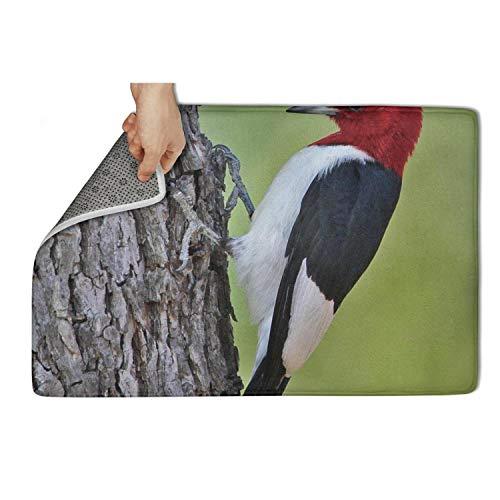 Yiastia_Minyi Indoor Outdoor Doormat Red Headed Woodpecker-01 Absorbent Moisture PVC Backing Entrance Rug Non Slip Door Mat 23.5