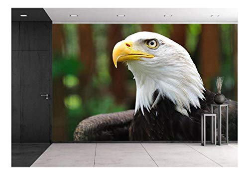 wall26 - Bald Eagle   Bird in Wildlife - Removable Wall Mural   Self-Adhesive Large Wallpaper - 100x144 inches - Majestic Flight Eagle