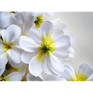 "(12) White Hawaiian Plumeria Frangipani Silk Flower Heads - 3"" - Artificial Flowers Head Fabric Floral Supplies Wholesale Lot for Wedding Flowers Accessories Make Bridal Hair Clips Headbands Dress 2"