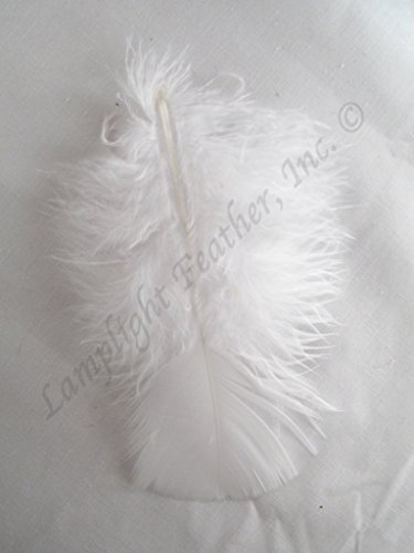 Turkey plumage, Approx 200 feathers, Many Color Options, per ounce, by Lamplight Feather Inc. (White)