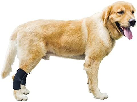 Amazon Com Gniks Dog Rear Leg Wrap Protects Brace Pets Joint Hock