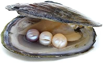 Image result for pearl in oyster lotus necklace