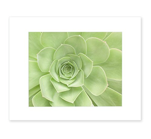 (Green Wall Art, Succulent Flower, Bathroom Wall Art, Floral Wall Decor, Botanical Print, Sage Green Picture, 8x10 Matted Photographic Print (fits 11x14 frame), 'Succulent Heart')
