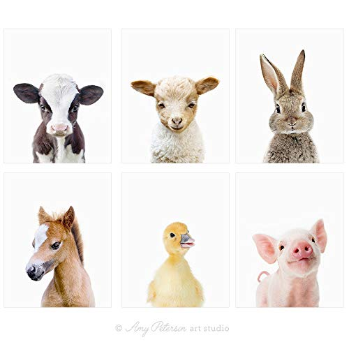 Amy Peterson Baby Farm Animal Portraits  Set of 6 Unframed Prints 8x10 Inch