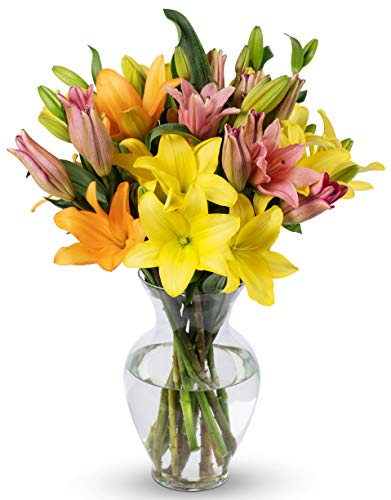 Benchmark Bouquets 12 Stem Assorted Asiatic Lilies, With Vase (Fresh Cut Flowers)