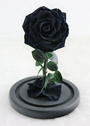 Preserved Rose Never Withered Roses Flower in Glass Dome, Gift for Valentine's Day Anniversary Birthday Mother's Day (Small, Black)