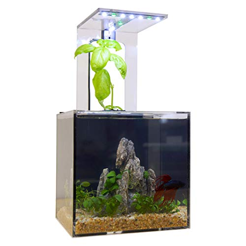 (EcoQube C Aquarium - Betta Fish Tank with UV LED Sterilizer and Aquaponic System for Desks, Offices, and Home Décor)