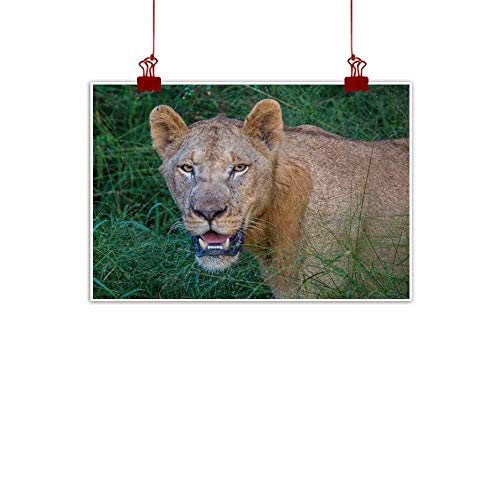 duommhome Wall Art Decor Poster Painting Afrion Lion in The Savannah at The Hlane Royal National Park Swaziland Modern Minimalist Atmosphere 32