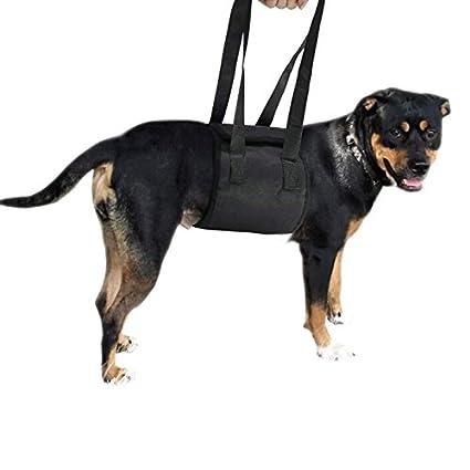 Espeedy Portátil Anciano discapacitado Mascota Auxiliar cinturón ...