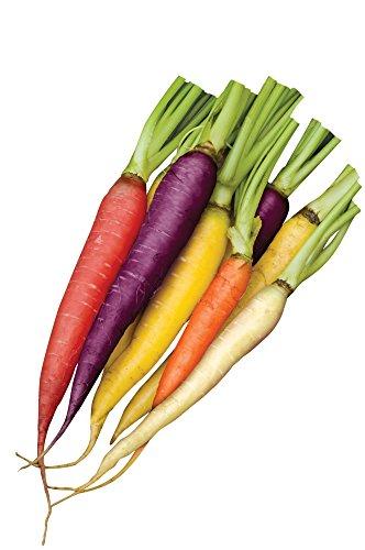 (Burpee Kaleidoscope Blend Carrot Seeds 1500 seeds)