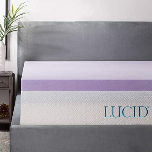 LUCID 3 Inch Lavender