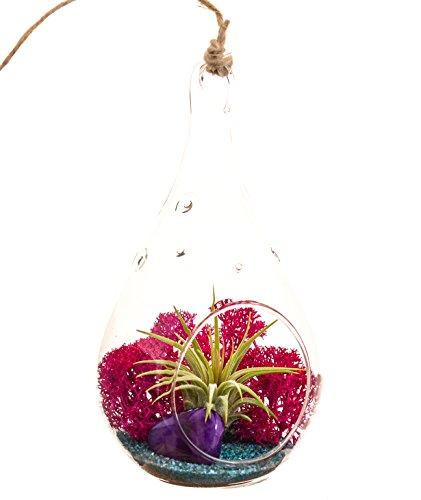 Bliss Gardens Mini Air Plant Terrarium with 5