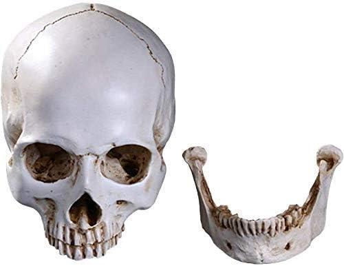 Menselijke schedel model hars medische anatomische levensgrote Halloween decoratie standbeeld