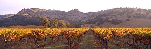 - Stag's Leap Wine Cellars, Napa Valley, CA by Panoramic Images Art Print, 43 x 14 inches