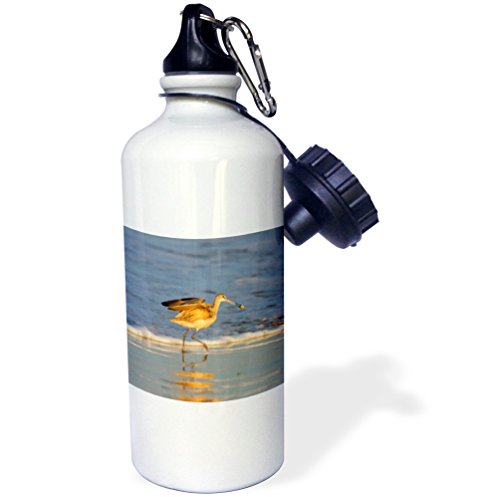 Danita Delimont - Birds - Whimbrel shorebirds foraging Pismo Beach, California - 21 oz Sports Water Bottle - Coast Pismo