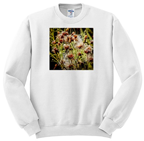 Price comparison product image 3dRose Alexis Photography - Seasons Summer - Seeds Of a Greater burdock Arctium Lappa Plant In Summer - Sweatshirts - Youth Sweatshirt Small(6-8) (SS_273232_10)