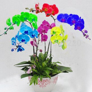 Rare 200pcs mix farbe phalaenopsis orchideen blumensamen bonsai topf rare 200pcs mix farbe phalaenopsis orchideen blumensamen bonsai topf hausgarten pflanzen schmetterling orchidee samen thecheapjerseys Choice Image
