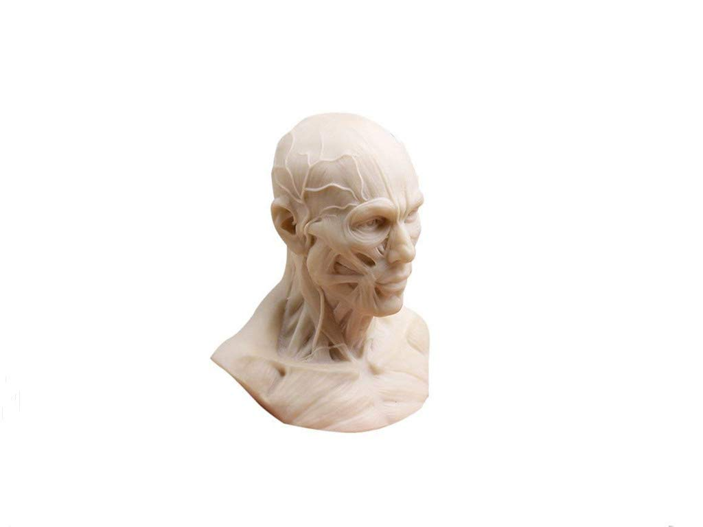 Sohome 10cm Human Model Anatomy Skull Head Muscle Bone Medical Craft