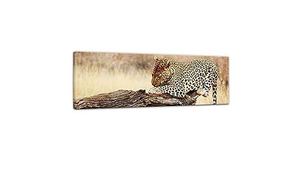 Bilderdepot24 Cuadros en Lienzo Leopardo 90 x 30 cm - Listo tensa, Directamente Desde el Fabricante: Amazon.es: Hogar