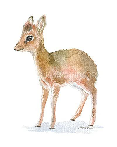 Amazon DikDik Antelope Watercolor